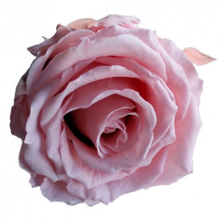 33 Rose Amour